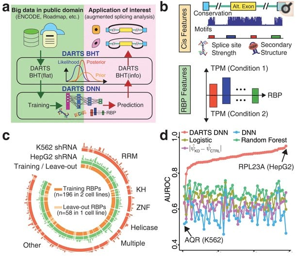 Fig 1. The DARTS computational framework for deep learning-augmented RNA-seq analysis of transcript splicing.